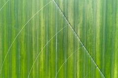 System irygacyjny w pszenicznym polu Obrazy Royalty Free