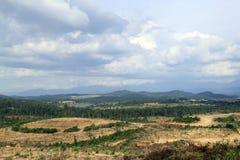 systematisk deforestation arkivbilder
