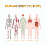 Systeme des menschlichen Körpers Stockfotos