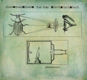 Systeme optique de cru illustration de vecteur