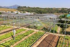 Système d'irrigation par aspiration du potager Photo libre de droits