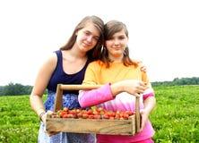 Systrar som väljer jordgubbar Royaltyfri Fotografi