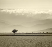 Sytle gris Paddy Rice Field Image stock
