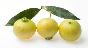 Syzygium jambos rose apple Royalty Free Stock Photography