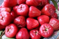 Syzygium Samarangense Στοκ Φωτογραφίες