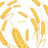 Szablon dla chlebowego projekta Sztandar dla piwnej etykietki, zboże produkty również zwrócić corel ilustracji wektora Zdjęcia Stock