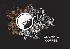 Szablon gałąź kawowy drzewo, liście, kwiaty i fasole, wektor royalty ilustracja