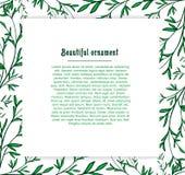 Szablon karty dla rośliny tła zieleń Royalty Ilustracja