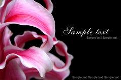 szablon kwiatów Fotografia Stock