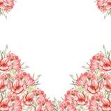 Szablon pocztówka z czerwonymi kwiatami Obrazy Royalty Free