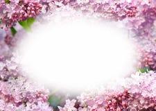 Szablonu projekt z kwiatami Zdjęcia Royalty Free