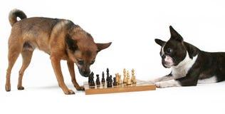 szach - mat Fotografia Royalty Free