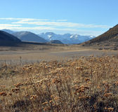 Szalej rośliny w Nowa Zelandia Southen Alps w wiośnie Fotografia Royalty Free