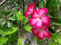 Szaleni roślina koloru miłości natury ludzie obraz stock