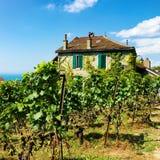 Szalet blisko Lavaux winnicy tarasów wycieczkuje śladu Lavaux Oron Sw Zdjęcie Stock