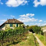 Szalet w Lavaux winnicy tarasach wycieczkuje ślad Lavaux Oron Fotografia Stock