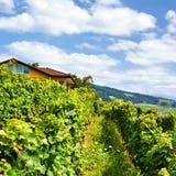 Szalet w Lavaux winnicy tarasach wycieczkuje ślad Lavaux Oron Szwajcaria Fotografia Royalty Free