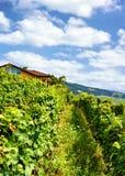 Szalety blisko Lavaux winnicy tarasów wycieczkuje ślad Lavaux Oron Szwajcaria Zdjęcia Stock