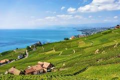 Szalety blisko Lavaux winnicy tarasów wycieczkuje ślad Szwajcaria Obrazy Royalty Free