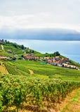 Szalety przy Lavaux winnicy tarasami wycieczkuje ślad Szwajcaria Zdjęcie Stock
