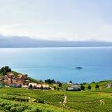Szalety przy Lavaux winnicy Tarasowym wycieczkuje śladem Szwajcaria Obraz Stock