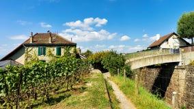 Szalety w Lavaux winnicy tarasach wycieczkuje ślad Lavaux Oron Zdjęcia Stock