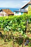 Szalety w Lavaux winnicy tarasach wycieczkuje ślad Lavaux Oron Swi Zdjęcie Stock