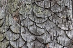 Szalkowy drewniany cyzelowanie zdjęcia royalty free