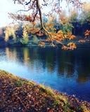 Szalona jesień Obraz Royalty Free