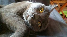 Szalony kot robi szalonemu materiałowi Zdjęcie Royalty Free