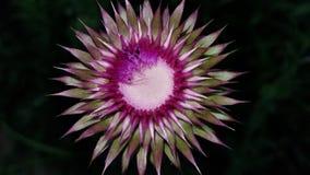 szalony kwiat zdjęcia royalty free