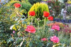 Szalony ogień od jaskrawych jedwabniczych ogromnych kwiatów zdjęcie royalty free