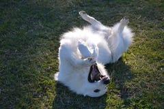 Szalony pies Obrazy Stock