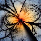 Szalony spinowy koła drzewo Fotografia Royalty Free