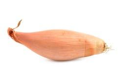 Szalotek cebule na białym tle Fotografia Royalty Free