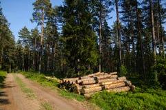 Szalunek sterta w zielonym lesie Zdjęcie Stock
