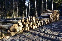 Szalunku drewno w lesie Obrazy Royalty Free