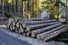 Szalunku drewno w lesie Obrazy Stock