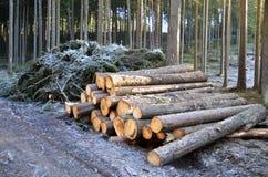 Szalunku drewno w lesie Zdjęcia Royalty Free
