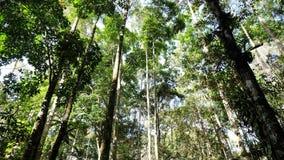 Szalunku drzewo Zdjęcia Stock