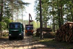Szalunku transport w lesie i zbierać obrazy stock