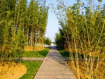 Szanghaj Chenshan ogródu botanicznego bambusa las Obraz Stock