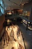 Szanghaj historii naturalnej muzeum Zdjęcie Stock