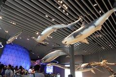 Szanghaj historii naturalnej muzeum Zdjęcie Royalty Free