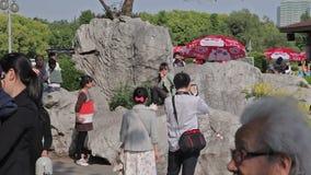 Szanghaj miasta park zbiory