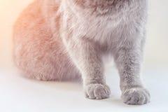 Szara kota ` s łapa na panelu obrazy royalty free