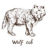 Szarego wilka szalunku wilk lub zachodni wilczy lisiątko, ręka rysujący doodle ilustracji