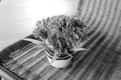 Szarość bukieta stylowy kwiat Obraz Royalty Free
