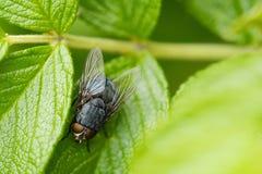 Szarość dalej komarnicy prześcieradło w lato ogródzie - - Obrazy Stock