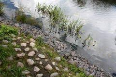Szarość kamienie na jeziornej jesieni fotografia royalty free